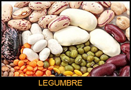 legumbre-web1-PEQUEÑO